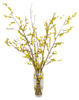 98159-yellow-forsythia-in-glass-vase-faux-c1109464d206856b3f35784a57c10d91